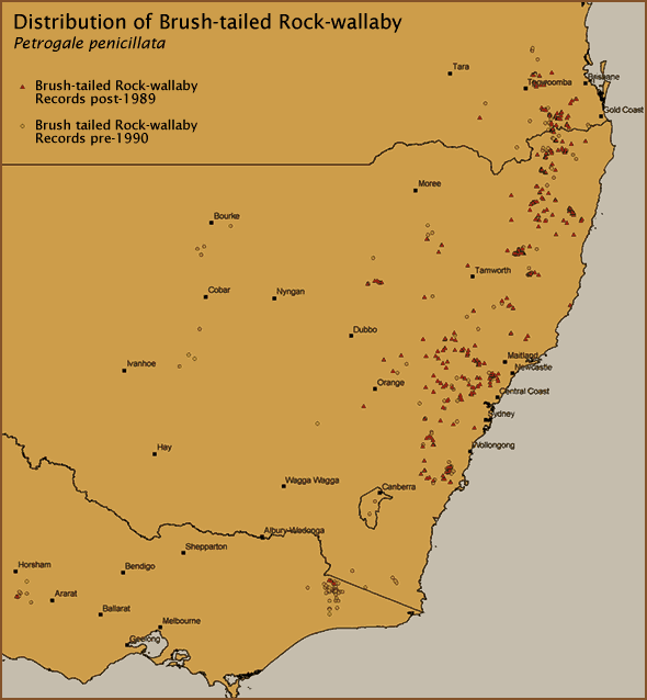 Distribution of Brush-tailed Rock-wallaby