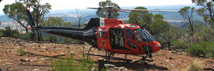 Helicopter arrives with Rock-wallabies - Photo: Ryan Collins