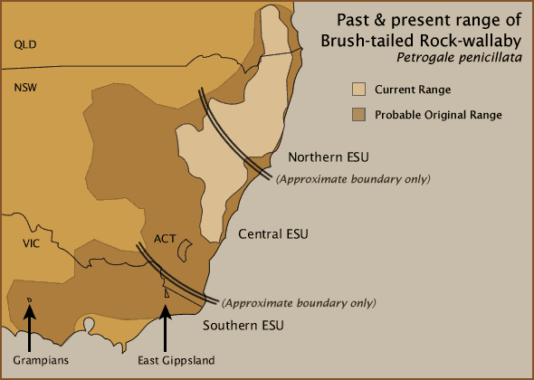 Past & present range of Brush-tailed Rock-wallaby